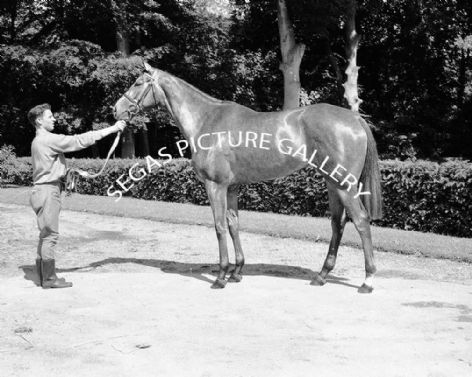 Racehorse Hula Dancer with Jockey R Poincelet